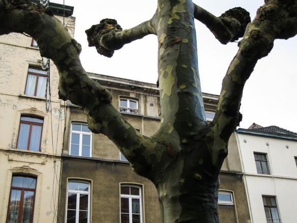 bumpy camouflage tree