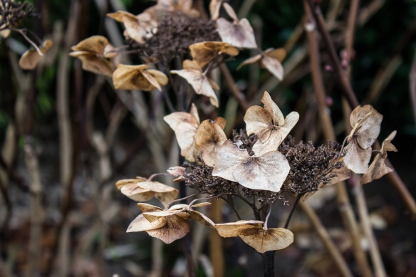 dried plants
